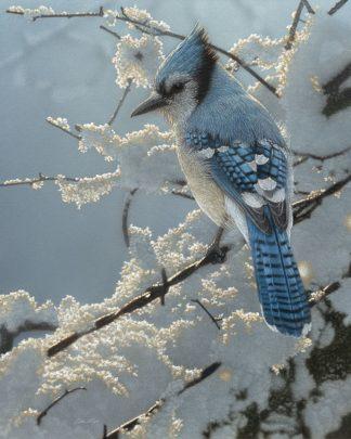 SBBC2044 - Bogle, Collin - Blue Jay - On the Fence