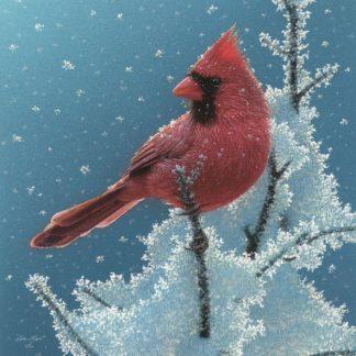 SBBC2045 - Bogle, Collin - Cardinal - Cherry on Top