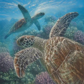 SBBC2049 - Bogle, Collin - Sea Turtles - Turtle Bay - Square
