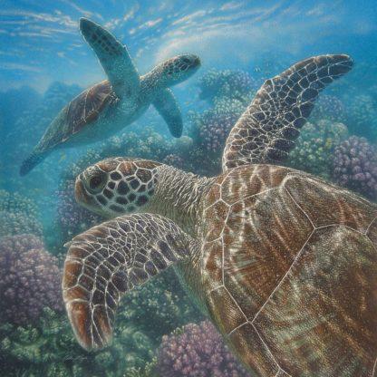 SBBC2049 - Bogle, Collin - Sea Turtles - Turtle Bay - Square