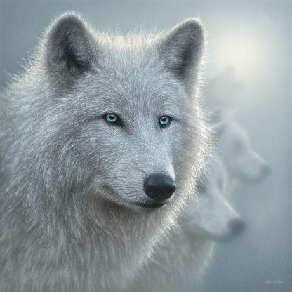 SBBC2052 - Bogle, Collin - Arctic Wolves - Whiteout