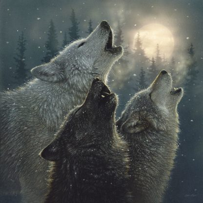 SBBC2055 - Bogle, Collin - Howling Wolves - In Harmony