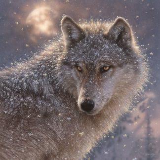 SBBC2057 - Bogle, Collin - Lone Wolf - Square