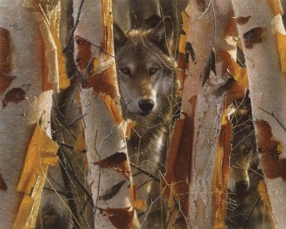 SBBC2070 - Bogle, Collin - Wolves - The Guardian