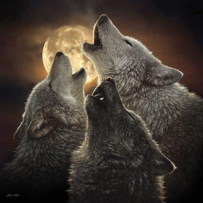 SBBC2072 - Bogle, Collin - Wolf Trinity