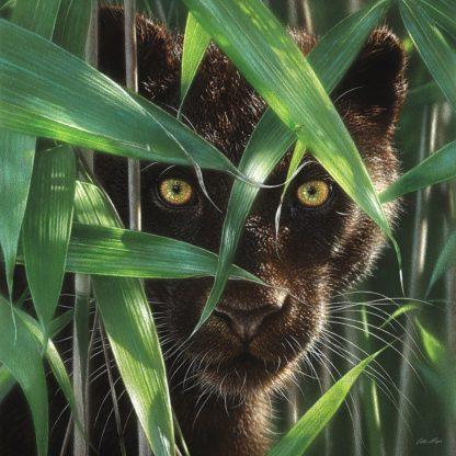 SBBC2077 - Bogle, Collin - Black Panther - Wild Eyes