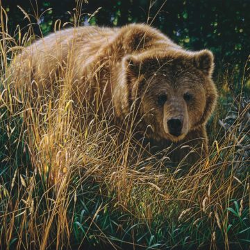 SBBC2084 - Bogle, Collin - Brown Bear - Crossing Paths
