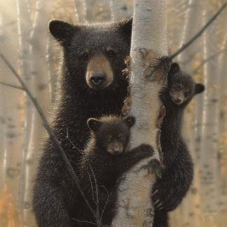SBBC2089 - Bogle, Collin - Black Bear Mother and Cubs - Mama Bear