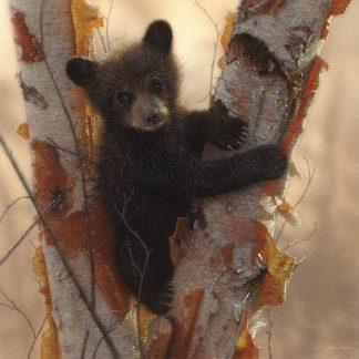 SBBC2090 - Bogle, Collin - Curious Cub I