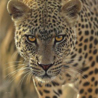 SBBC2102 - Bogle, Collin - Leopard - On the Prowl - Square