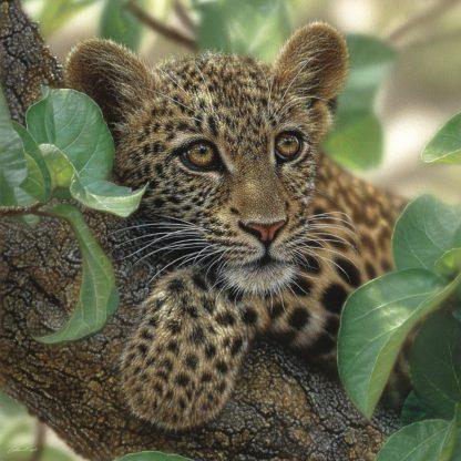 SBBC2105 - Bogle, Collin - Leopard Cub - Tree Hugger