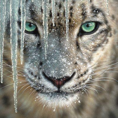 SBBC2107 - Bogle, Collin - Snow Leopard - Blue Ice