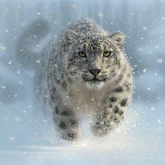 SBBC2109 - Bogle, Collin - Snow Leopard - Snow Ghost