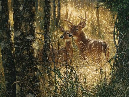 SBBC2118 - Bogle, Collin - Whitetail Deer - A Golden Moment - Horizontal