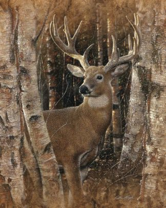 SBBC2120 - Bogle, Collin - Whitetail Deer - Birchwood Buck