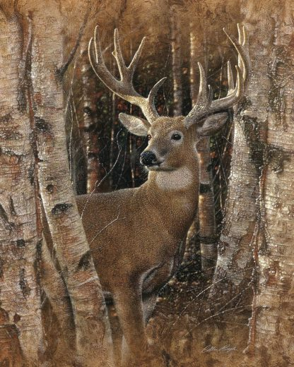 SBBC2120 - Bogle, Collin - Whitetail Deer - Birchwood Buck
