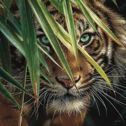 SBBC2139 - Bogle, Collin - Tiger Eyes