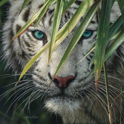 SBBC2142 - Bogle, Collin - White Tiger Bamboo Forest