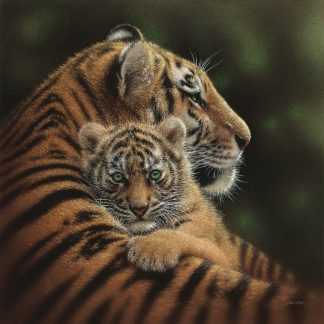SBBC2144 - Bogle, Collin - Tiger Mother and Cub - Cherished