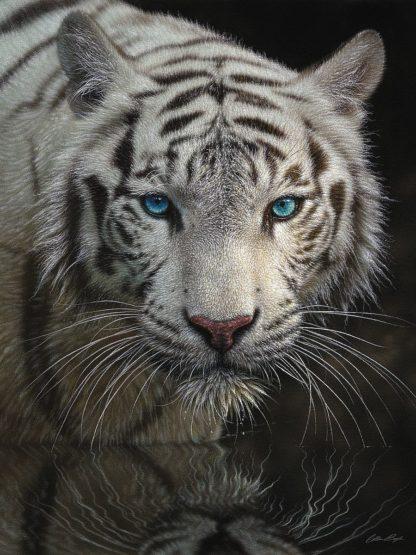 SBBC2145 - Bogle, Collin - White Tiger - Into the Light