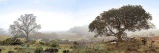 B3720D - Blaustein, Alan - Sonoma Oak Trees No. 1
