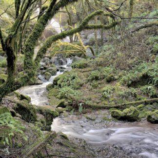 B3724D - Blaustein, Alan - Canyon Falls No. 6