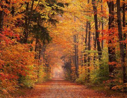 H1523D - Hammond, David - Autumn Road