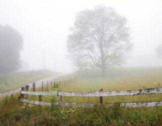 H1526D - Hammond, David - Foggy Rural Scene