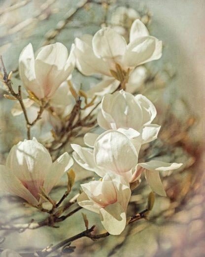 R1215D - Ryan, Brooke T. - Vintage Inspired Magnolias