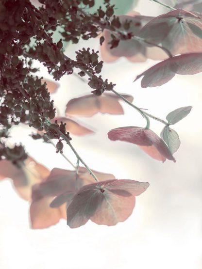 R1218D - Ryan, Brooke T. - Pink & Aqua Hydrangeas