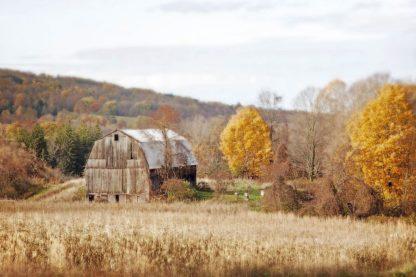 R1223D - Ryan, Brooke T. - Barn & Beehives