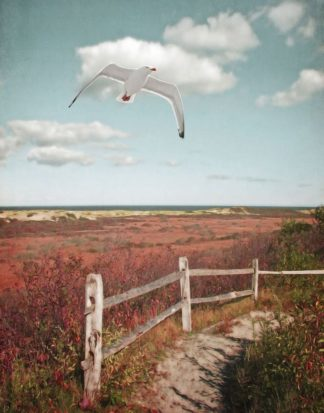 R1228D - Ryan, Brooke T. - Gull over Coastal Trail