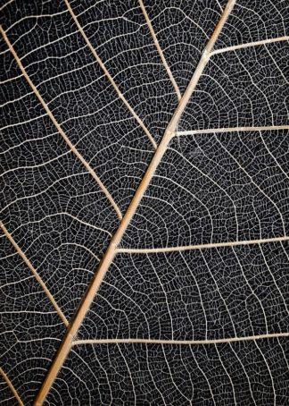 MF969-0894 - Design Fabrikken - Leaf Veins
