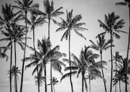 MF969-1057 - Design Fabrikken - Palm Heaven