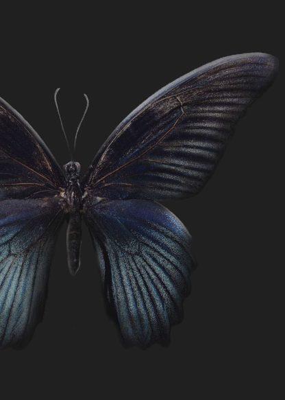 MF969-1078 - Design Fabrikken - Black Butterfly on Grey