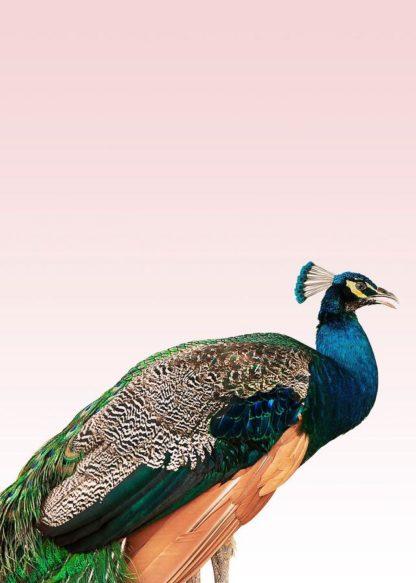 MF969-1121 - Design Fabrikken - Peacock on Pink