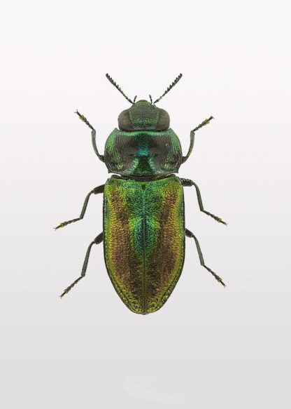MF969-1175 - Design Fabrikken - Beetle 1
