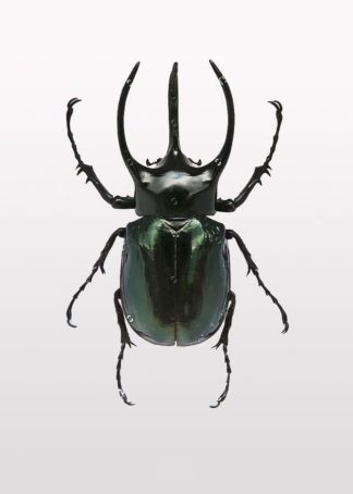 MF969-1176 - Design Fabrikken - Beetle 2
