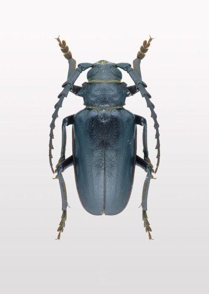 MF969-1177 - Design Fabrikken - Beetle 3