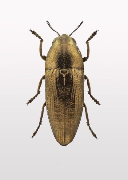 MF969-1178 - Design Fabrikken - Beetle 4