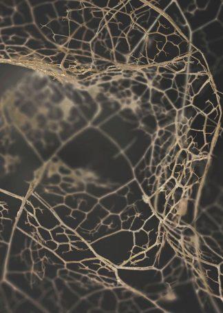 MF969-1220 - Design Fabrikken - Leaf Skeleton Dark