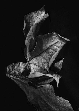MF969-1236 - Design Fabrikken - Leaf Composition, Dark