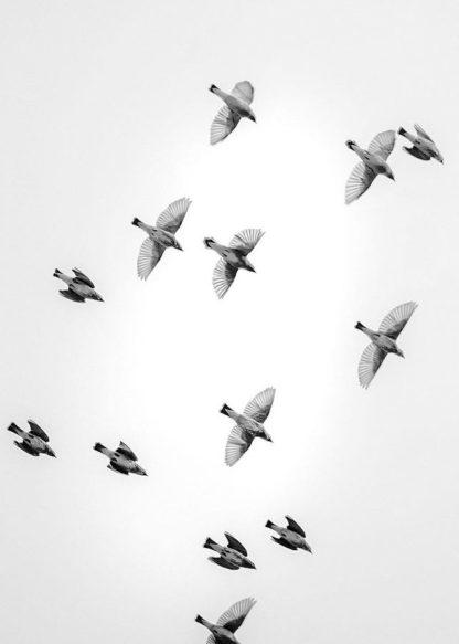 MF969-1260 - Design Fabrikken - In the Sky 1