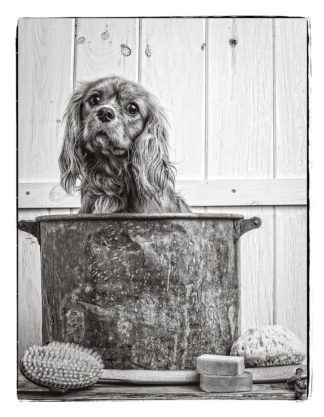 F768D - Fielding, Edward M. - Vintage Puppy Bath