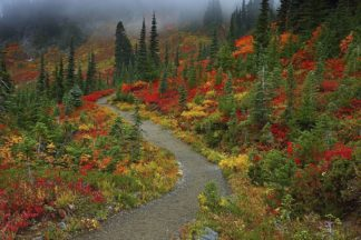 H1555D - Hodges, Randall J. - Foggy Trail, Mt. Rainier