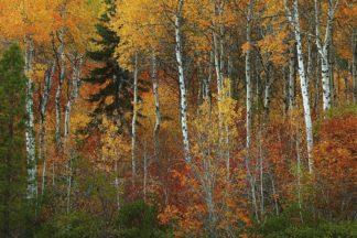 H1557D - Hodges, Randall J. - Wenatchee National Forest, WA