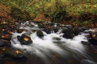 H1563D - Hodges, Randall J. - Bridal Veil Creek, Oregon