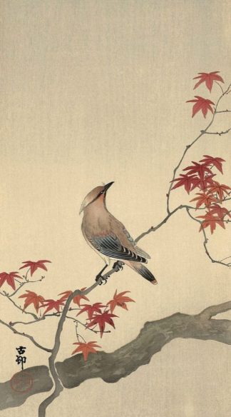 K2719D - Koson, Ohara - Japanese Waxwing on Maple, 1900-1936