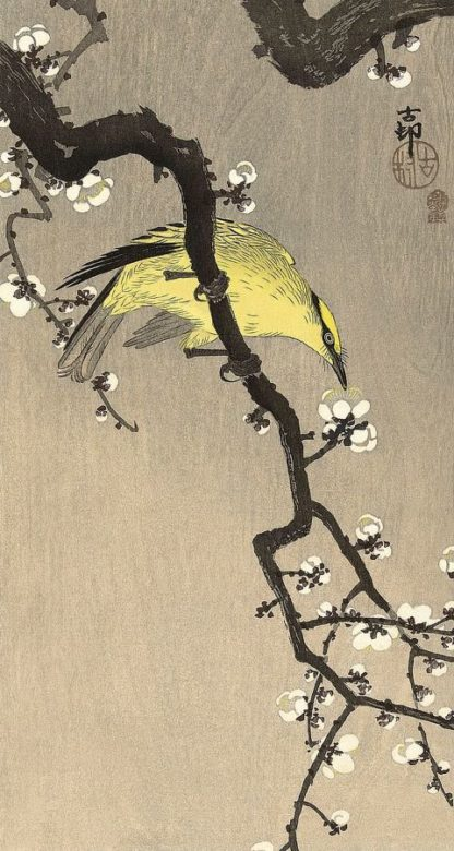 K2720D - Koson, Ohara - Chinese Wielewaal on Plum Blossom Branch, 1900-1910