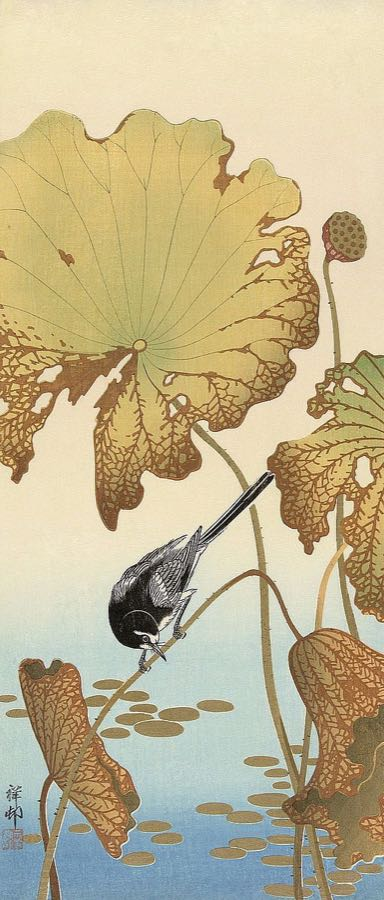 K2722D - Koson, Ohara - Japanese Wagtail on Lotus Plant, 1925-1936